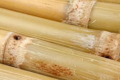 Azúcar y Bioenergía
